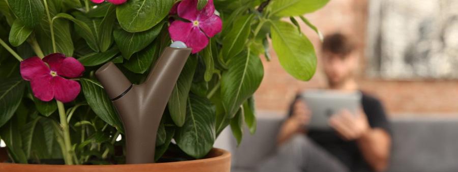 Flower Power : Capteur pour plantes