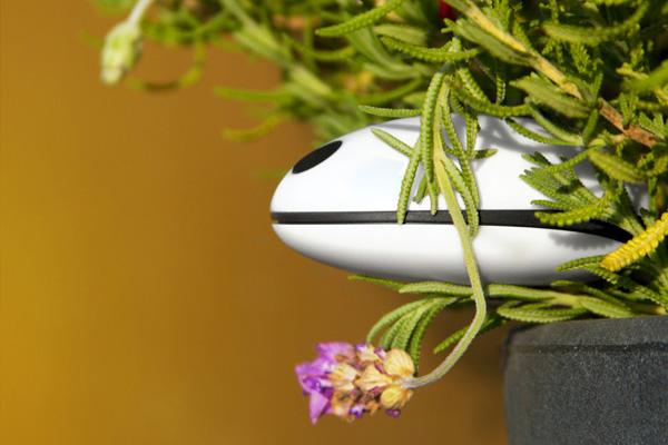 Koubachi Plant Sensor